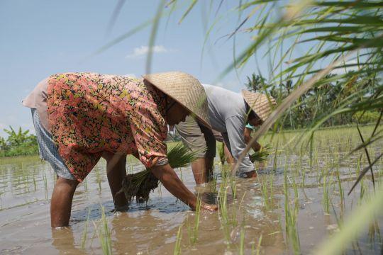 Anggota DPR dorong petani gunakan pupuk organik