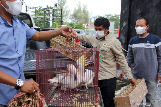 Penyerahan hewan langka dan dilindungi sitaan selundupan