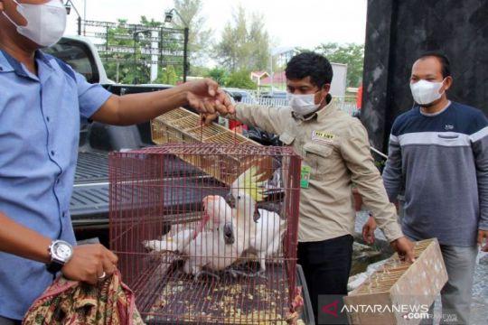 Kejari Dumai menerima barang bukti hewan sitaan selundupan