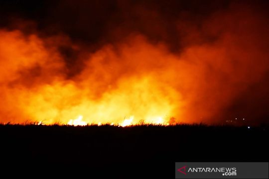 Kebakaran lahan tebu di Madiun
