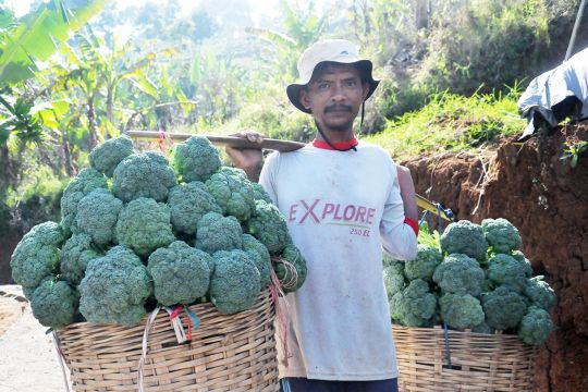 FAO soroti pentingnya sistem pertanian pangan berkelanjutan