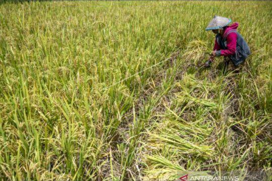 Mewujudkan sistem pertanian pangan yang lebih baik di Indonesia