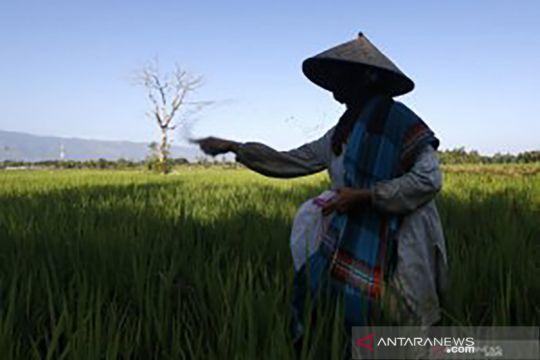 Memastikan ketahanan pangan nasional