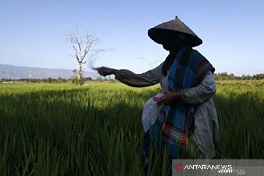 Pupuk Sriwidjaja: Program Makmur beri manfaat nyata bagi petani