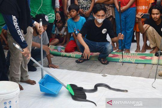 Sahabat Reptil Bekasi edukasi warga cara menangani gigitan ular