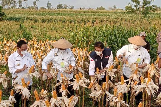 Menteri Pertanian inginkan sektor pertanian di NTT berkembang pesat