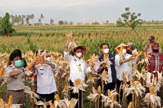 Mentan: Kabupaten Kupang daerah percontohan pertanian terintegrasi