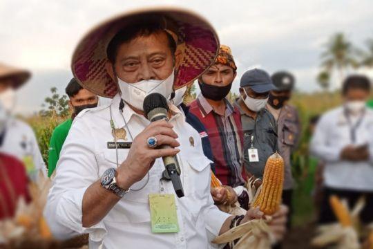 Mentan dorong petani di NTT asuransikan tanaman padi