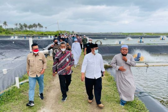 Stafsus Wapres: Tambak udang potensial dikembangkan di Tasikmalaya