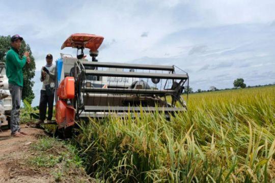 Food estate Pulang Pisau perluas lahan 3.000 ha tingkatkan hasil panen