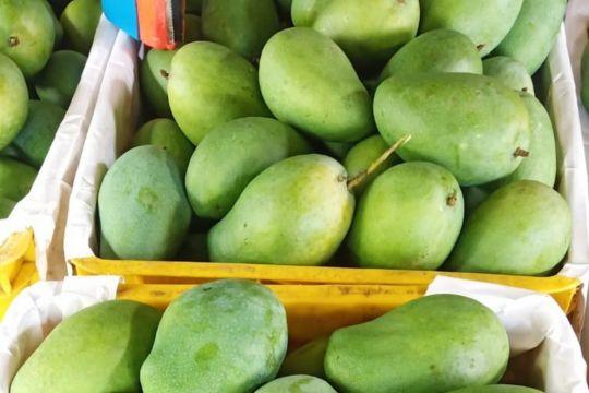 1,3 ton mangga Jatim diekspor ke Singapura