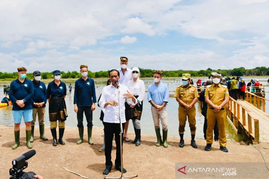 Presiden Jokowi targetkan rehabilitasi 600 ribu hektare hutan mangrove