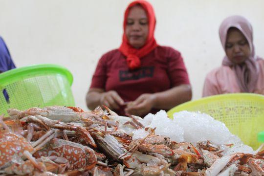 Peran wanita pengupas rajungan Lampung jadi agen konservasi