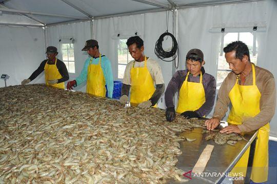 KKP dorong Sambas Kalbar jadi sentra produksi udang berkualitas