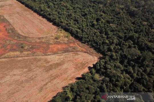Deforestasi hutan Brazil