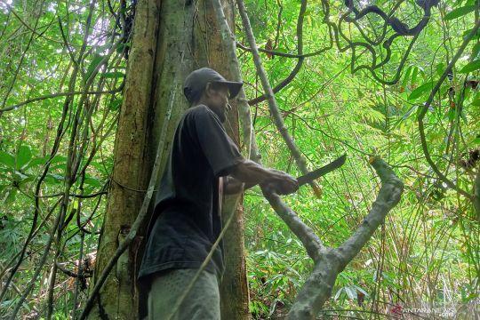 Tali kuning, andalan suku Moi Papua atasi berbagai penyakit