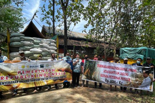 Bulog siap salurkan jagung pakan Rp4.500 per kg