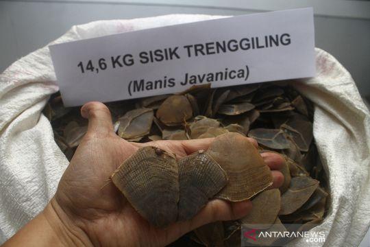 Kasus perdagangan sisik trenggiling di Kalbar