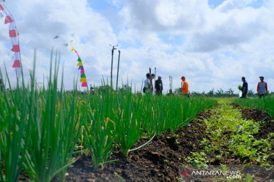 Melestarikan lahan gambut sebagai lahan produktif