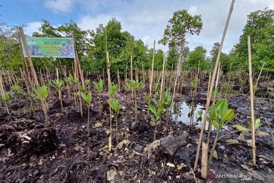BRGM merehabilitasi 1.500 hektare hutan mangrove di Papua Barat
