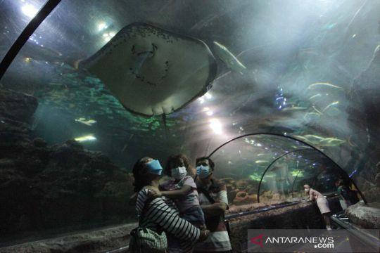 Anak usia di bawah 12 tahun boleh masuk SeaWorld Ancol