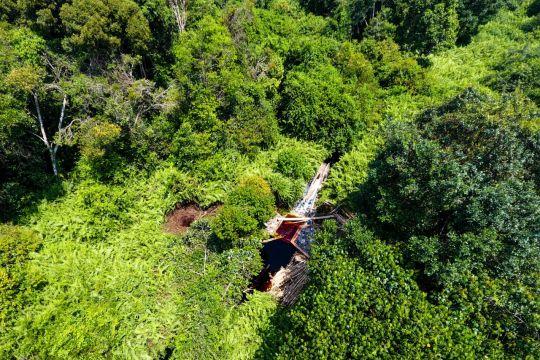 Menjaga hutan gambut dan karbon di Tanjungjabung Timur
