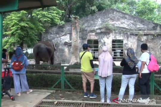 Warga DKI antusias bisa kembali kunjungi Taman Margasatwa Ragunan