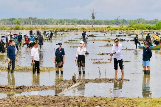 Rehabilitasi hutan mangrove dan cita-cita ekonomi hijau