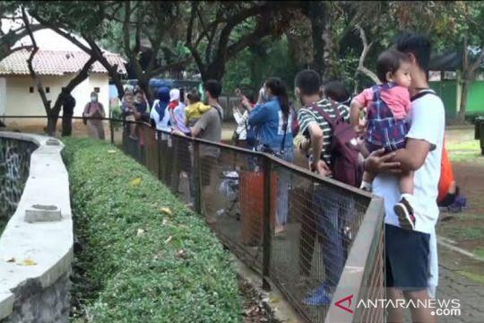 Ragunan dikunjungi 4.901 wisatawan pada hari pertama dibuka kembali