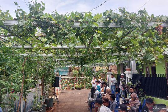 Menyulap gang sempit menjadi kebun anggur