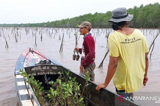 BRGM percepat rehabilitasi mangrove dukung pemerintah capai target NDC