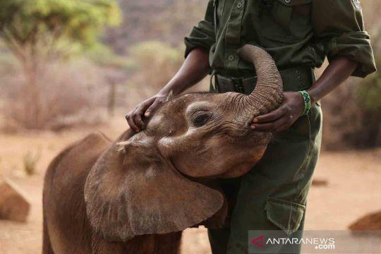 Suaka gajah Reteti Kenya