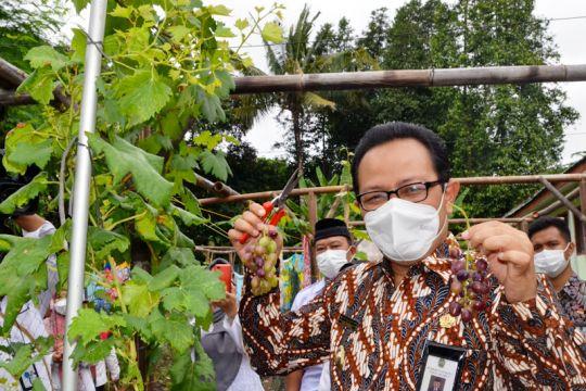 Karang Taruna Gowongan Yogyakarta olah lahan kosong ditanami anggur