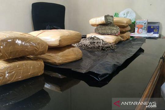 Polres Bukittinggi amankan 9,5 kg ganja dari satpam dan residivis