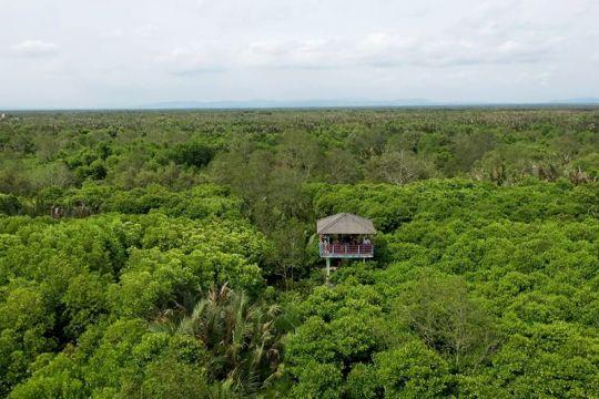 DLH: Kondisi mangrove di Cilacap makin membaik
