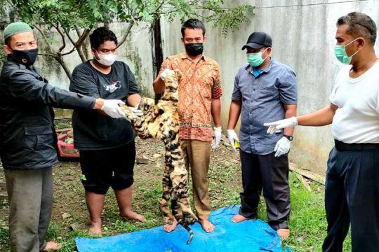 Tim gabungan menangkap penjual kulit harimau di Aceh