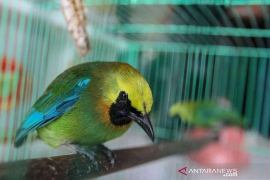 BBKSDA Riau amankan 39 ekor burung dilindungi