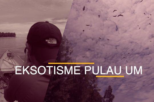Eksotisme Pulau Um, rumah bagi ribuan kalong liar dan burung camar