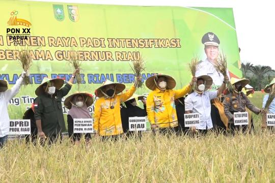 Riau dukung petani padi panen tiga kali setahun