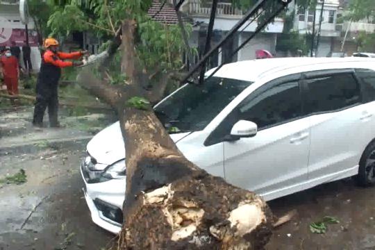 Cuaca buruk, pohon timpa mobil di Jember
