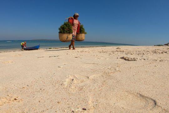 Mata Indonesia: Berdaya dengan rumput laut - Bagian 2