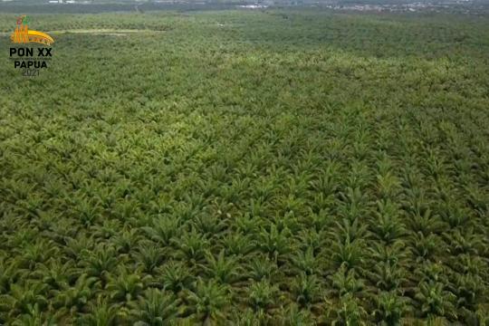 Riau yang menunggu dana bagi hasil sawit