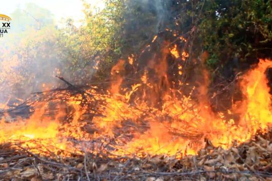 Selama Oktober, 57 hektare hutan dan lahan di Aceh terbakar