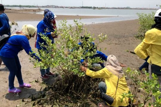 Kota Pekalongan tanam mangrove untuk kurangi dampak perubahan iklim