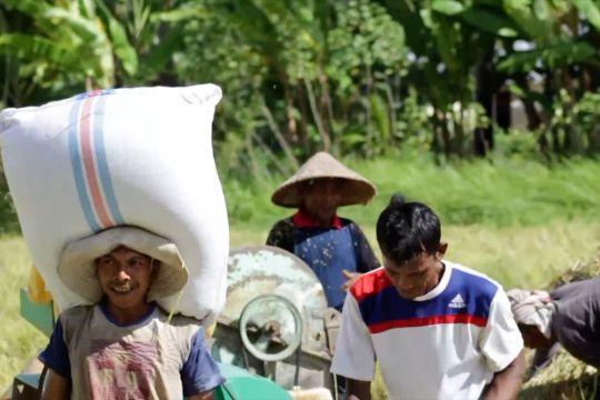 Optimisme Sumbar capai target produksi padi 1,5 juta ton di 2021