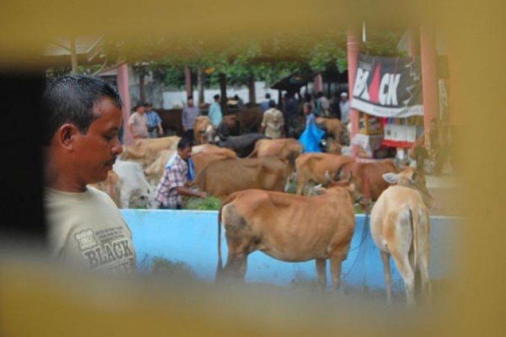 Pemkab Kapuas Hulu ingatkan ancaman pidana pemotongan ternak langgar UU