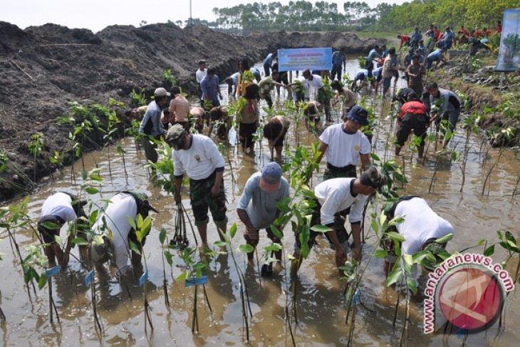LDII plants 3,000 mangrove trees in SE Sulawesi