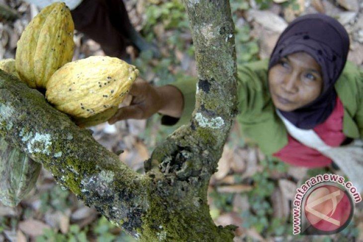 Bea keluar biji kakao tetap lima persen