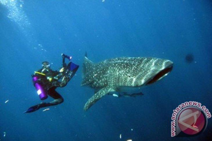 Shark fishing ban in Raja Ampat continues to be violated