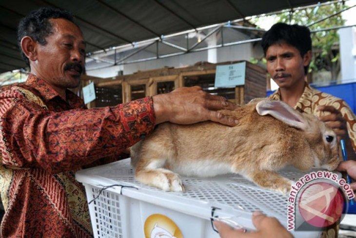 Kelinci unik di Rabbit Festival 2012